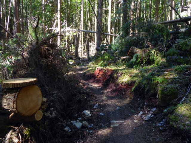 cut trees on trail